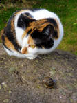 A cat and her snail