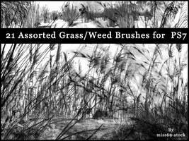 Grass and reed Brushes