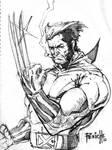 Wolverine Con Sketch
