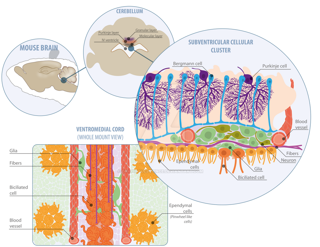 Cell, Developmental, and Microbiology on BioIllustration ...