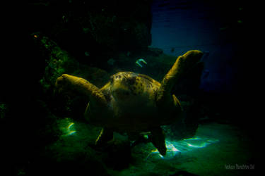 Hugging Turtle