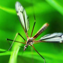 Insect by Stilllife-Txa