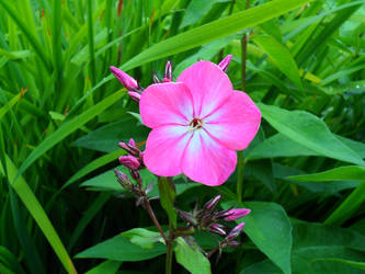 A small little flower