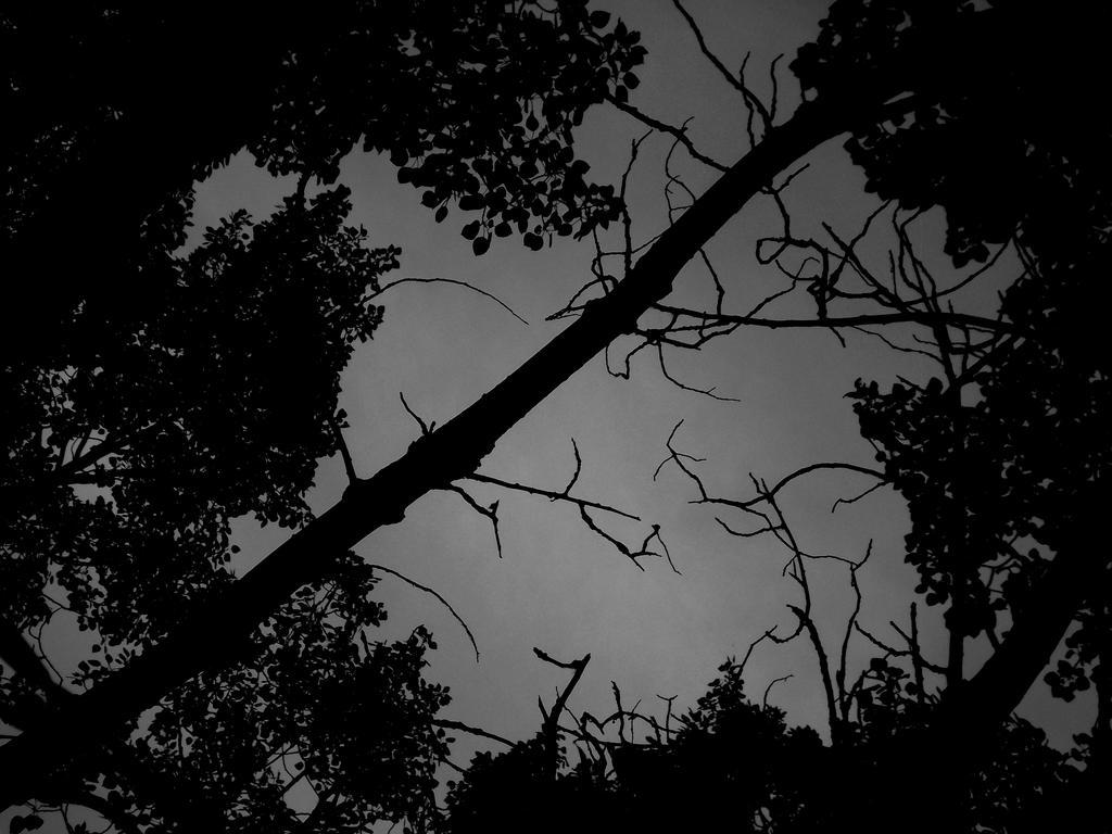Deadly bone tree.. by cryptwish