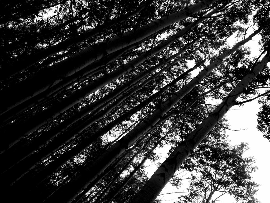 Tree-angle.. by cryptwish