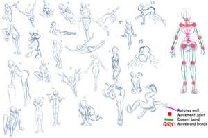 how do i anatomies Oo by Lady-Lillika