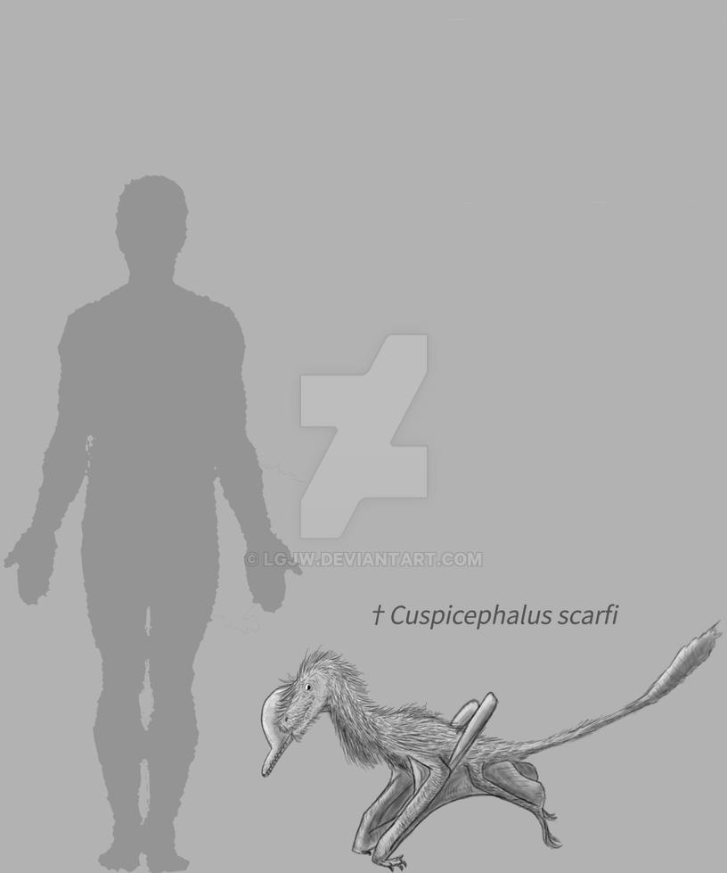 Cuspicephalus test by LGJW