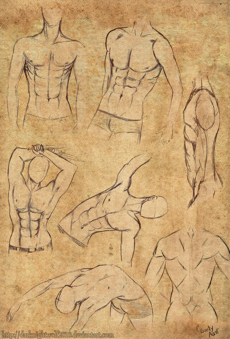 Male Anatomy- Waist Up by darknightwolf2010