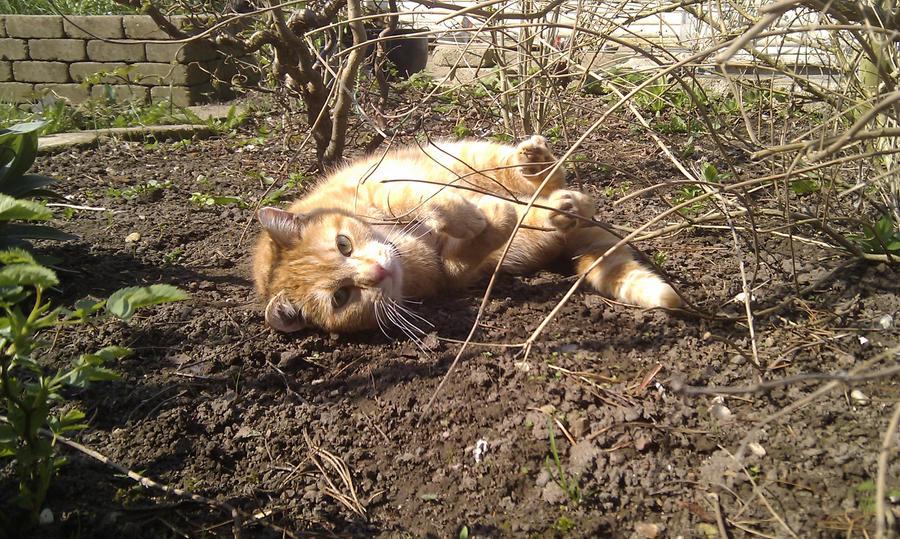 Garfield: Soaking in the Sun