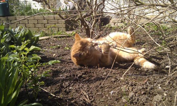 Cat: Attack the bush!