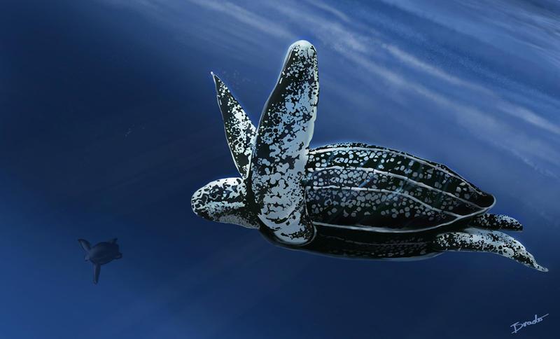 baby sea turtle drawings