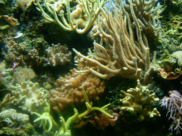 Coral Reef by Covetous-Creature