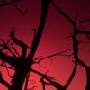 LJ Icon-Red Sky by MandaSpAz