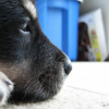 LJ Icon-Puppy by MandaSpAz