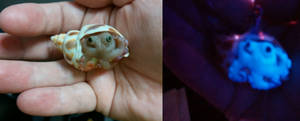 Polymer Clay Octopus hiding in a shell charm