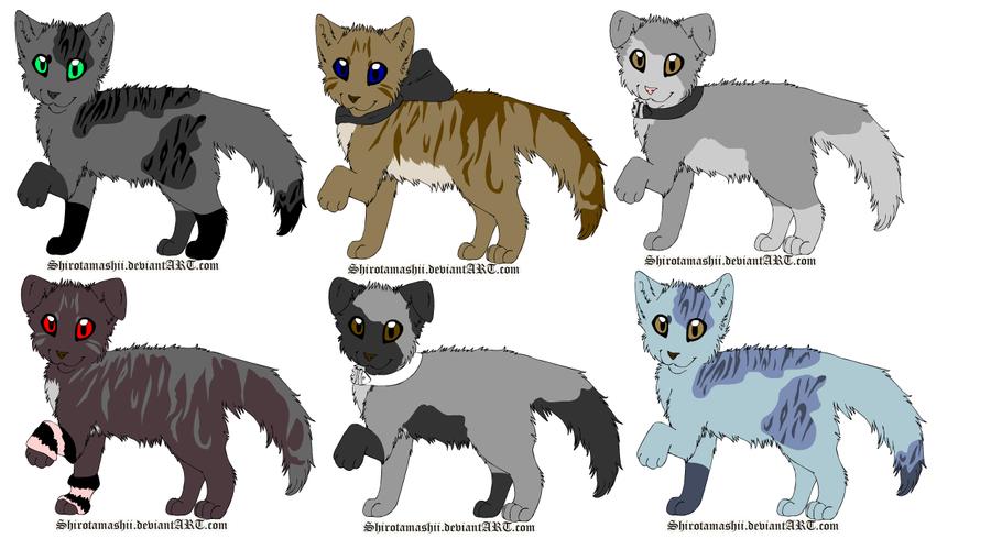 cat breed ragamuffin