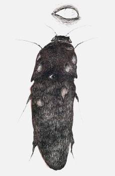 'beetle of mimic'