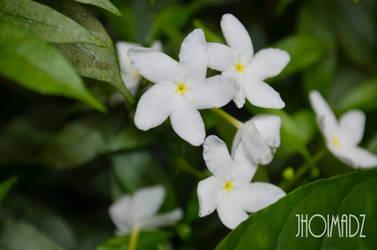 White flower by jhoimadz