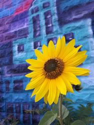 A little but of sunshine by erana