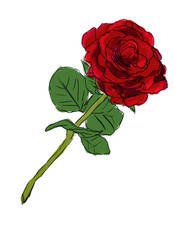 Rose by erana