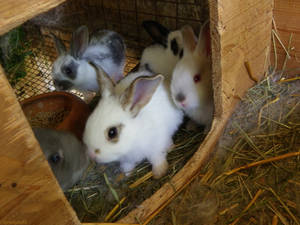 Bunnies - A Bit Older