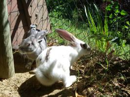 Bunnies - Adult Step