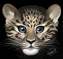 Amur leopard by thundercake