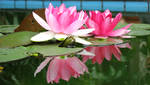 Reflected Lotus by xilinx