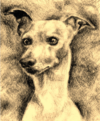 Whippet by Clutterbuck