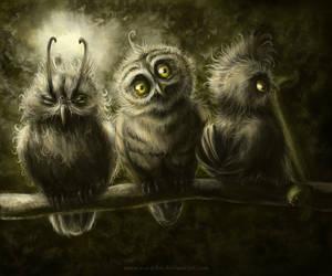 Owls by n-a-S-t-u