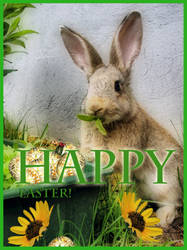 Happy Easter Finland