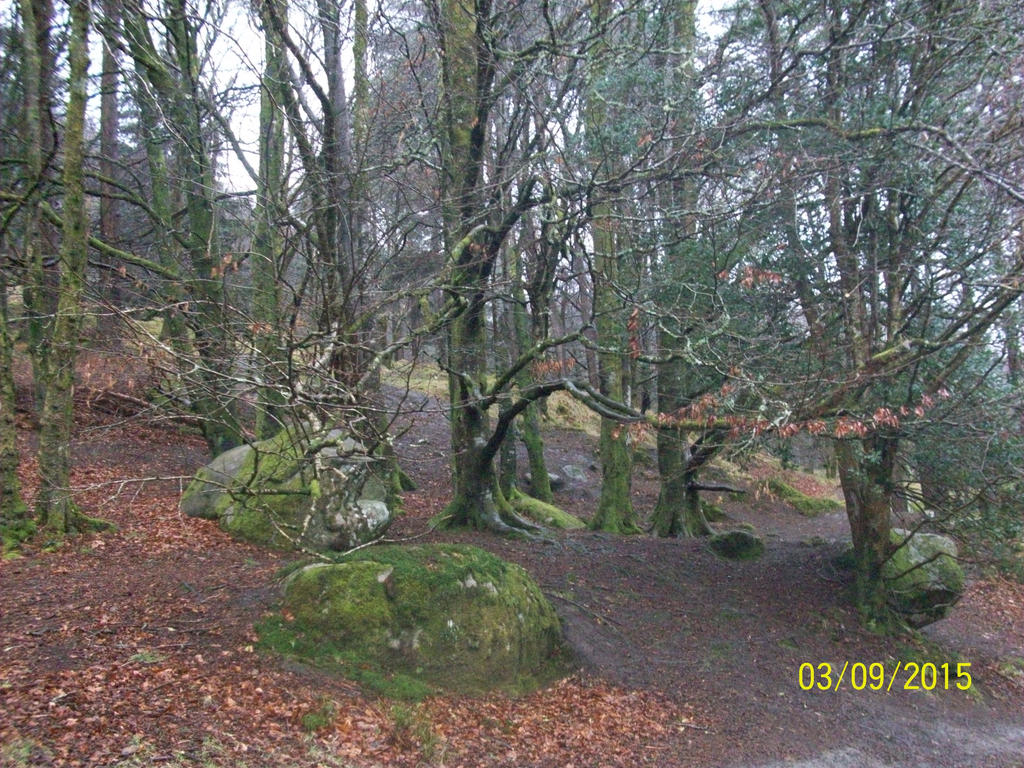 The Fairy Woods by MademoiselleRosa