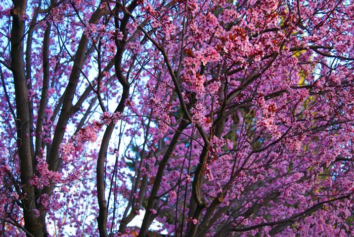 Spring's Awakening by acidflow