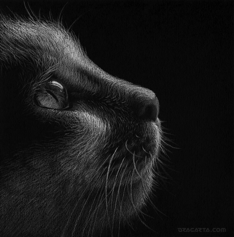 Cat by Dragarta