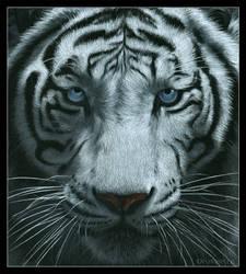 White tiger by Dragarta