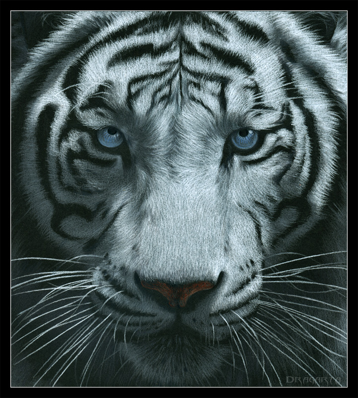 Tygrys 1 swatanie
