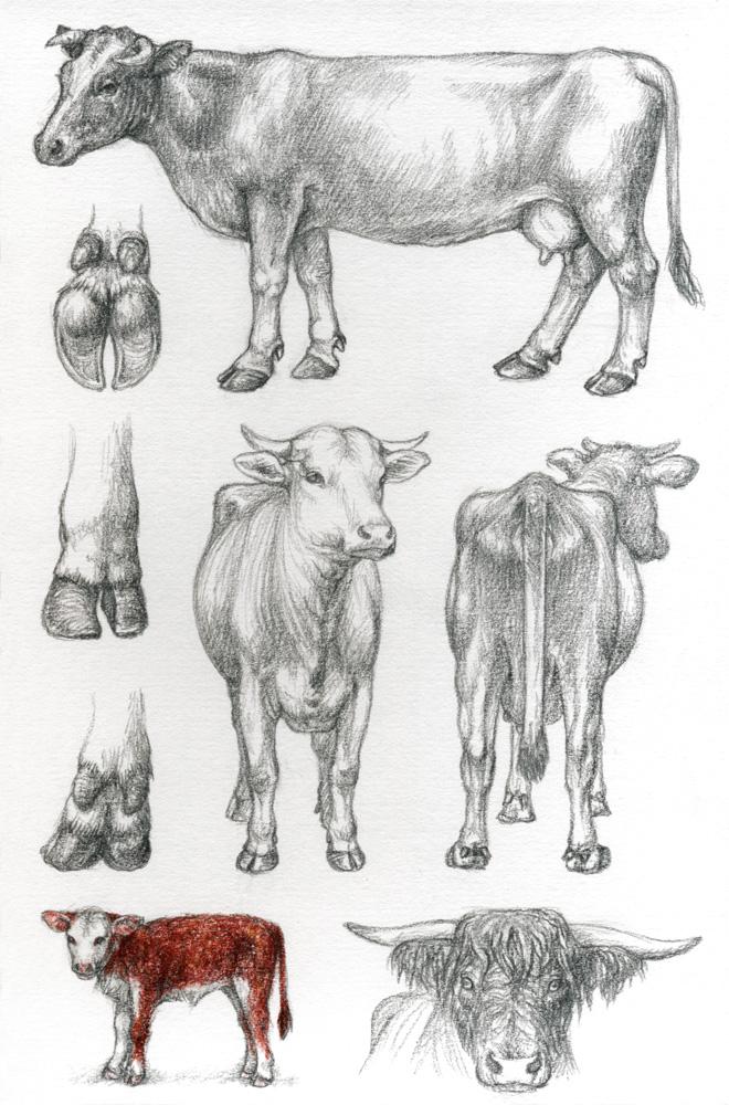 Asp6 Cattle By Dragarta On Deviantart