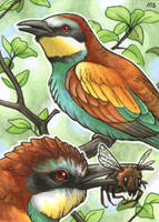 ACEO for Woodswallow by Dragarta