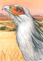 ACEO for Kailavmp - Secretary Bird