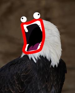 LazerEagle1's Profile Picture