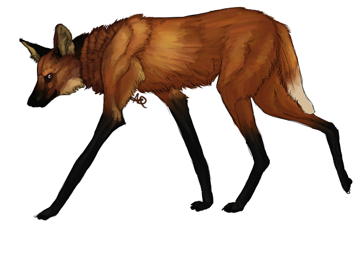 A Lot Of Maned Wolf By Loputyn Deviantart Com On: Why Hallo There By Highlighterjuice On DeviantArt