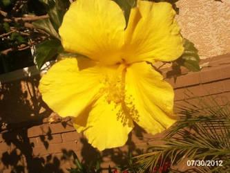 Une jolie fleur by ElectricMayhem1