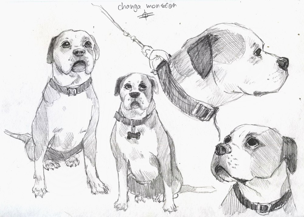dog sketches by theCHANGA