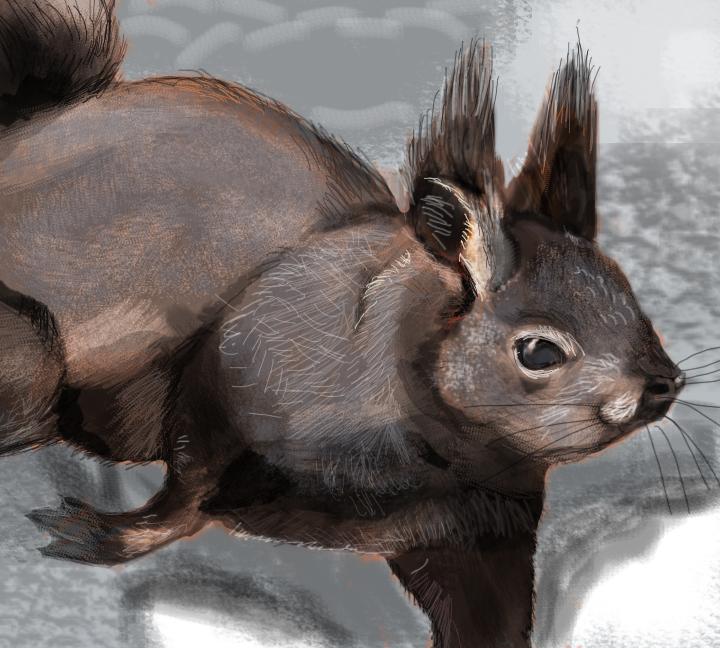 Tassel Eared Squirrel Speed Painting by Inari123 on DeviantArt