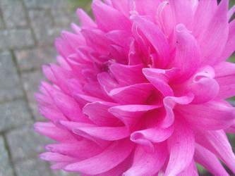 Flower. by MyNameIsDom