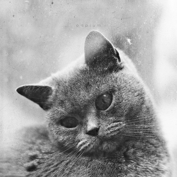 Sad Cat by odpium