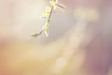 spring by odpium