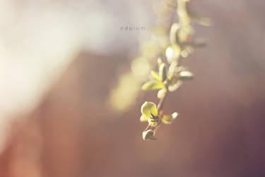 spring II by odpium