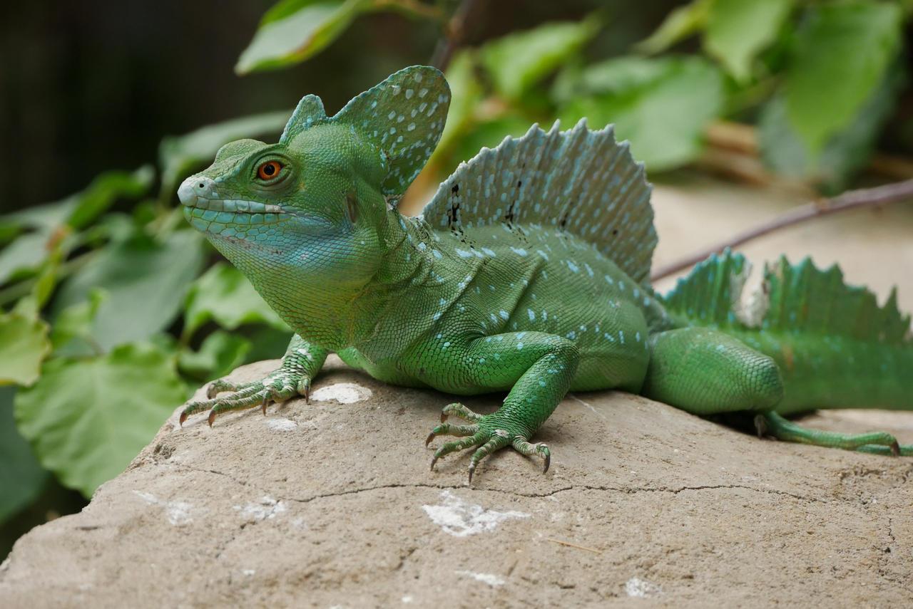 Basilisk Lizard by wolfqueen1990 on DeviantArt