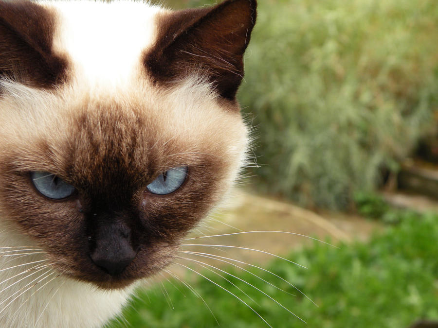 Intimidating eyes by sonya-pop
